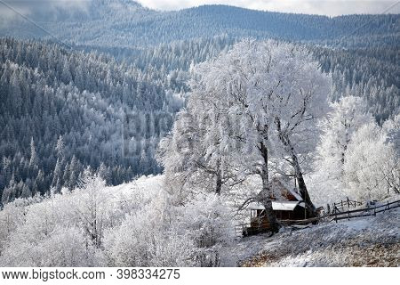 Christmas background of snowy winter landscape with snow or hoarfrost covered trees - winter magic holiday
