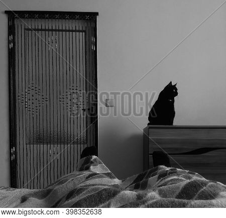 Chomutov, Czech Republic - October 20, 2020: Black Cat Violka In Bedroom