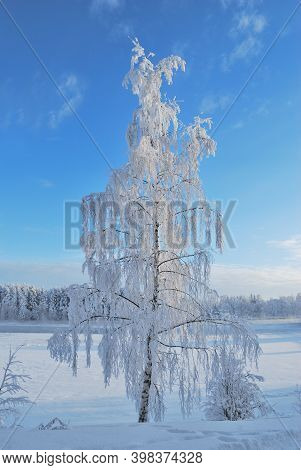 Finland. Very Beautiful  Snow-covered Tree In The Park Of Imatra In Winter