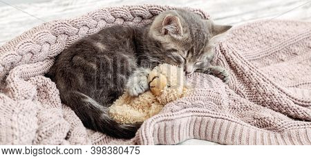 Baby Cat Sleeps On Cozy Blanket Hugs A Toy. Fluffy Tabby Kitten Snoozing Comfortably With Teddy Bear