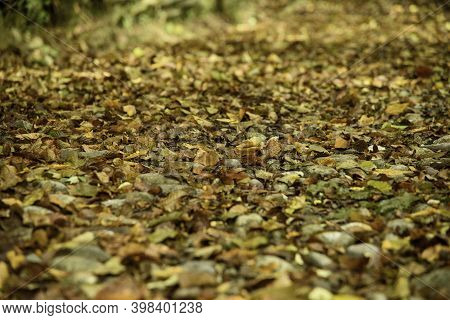 Autumnal Path In The Middle Of The Woods. Colored Leaves And Stones After The Rain.