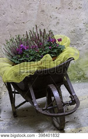 Flower Arrangements In A Mountain House. Using An Old Vintage Cariola As A Flower Container.