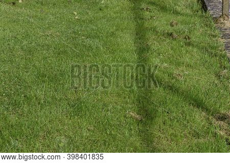Green Lawn With Shadow Of Wooden Fence. Green Grass Field, Green Lawn.