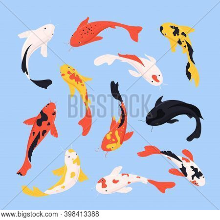 Cartoon Color Different Koi Fish Icons Set Flat Design Style Traditional Asian Symbol Of Man, Fortun