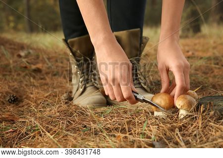 Woman Cutting Porcini Mushroom With Knife In Forest, Closeup