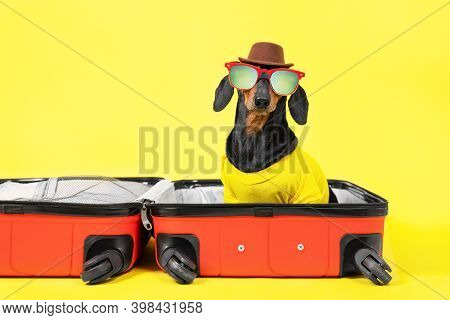 Dachshund Dog In Summer T-shirt, Hat With Sunglasses Gathers Things For Vacation On Trip, Sit In Ope