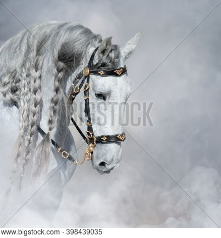 Spanish light gray horse with long mane in bridle in light smoke.