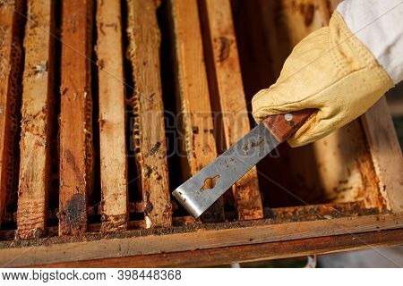 Beekeeper Pulls Out Wooden Frame With Honeycomb From Beehive Using Beekeeper Tool. Collect Honey. Be
