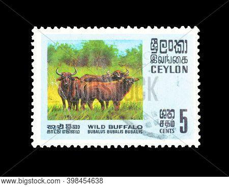 Ceylon : Circa 1960 : Cancelled Postage Stamp Printed By Ceylon, That Shows Wild Buffalo, Circa 1960