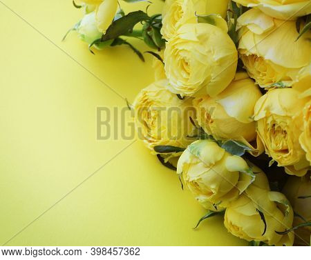 Beautiful Yellow Pion-shaped Rose. Bouquet Shrub Roses On Yellow Background. Copy Space