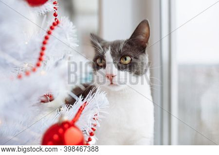 Young Little Cat Of A Gray And White Color Fur Sits Near The Fir Tree Decorated With Red Balls, Toys