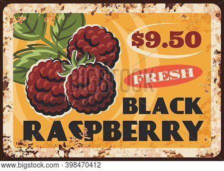 Black Raspberry Rusty Metal Plate, Vector Vintage Rust Tin Sign With Ripe Garden Or Wild Berries. Ga