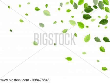 Grassy Leaves Abstract Vector Background. Realistic Greens Template. Olive Foliage Tea Border. Leaf