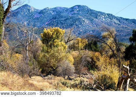 Cottonwood Trees Changing Colors During Autumn On A Creekbed At A Riparian Woodland Surrounded By A