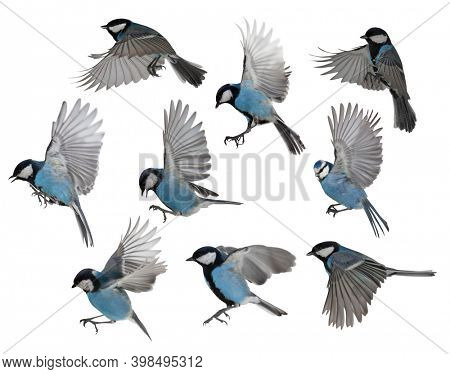set of tits in flight isolated on white background