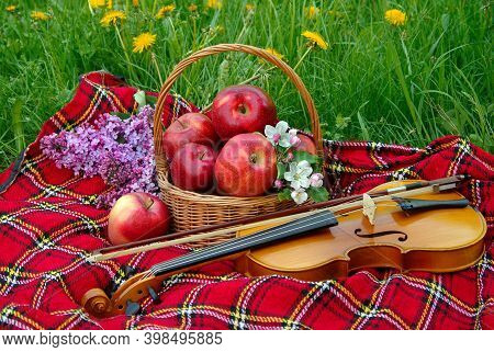 Fresh Red Apples In A Wicker Basket In The Garden. Picnic On The Grass. Ripe Apples And Violin. Plai