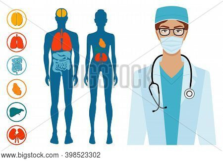 Human Body Structure Skeleton And Circulatory Vascular System. The Location Of Organs In The Body. B