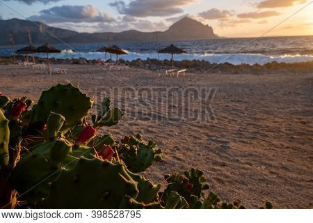 Sunset At The Beach Of San Vito Lo Capo Sicily With On The Foreground Prickly Pears Opuntia Ficus-in