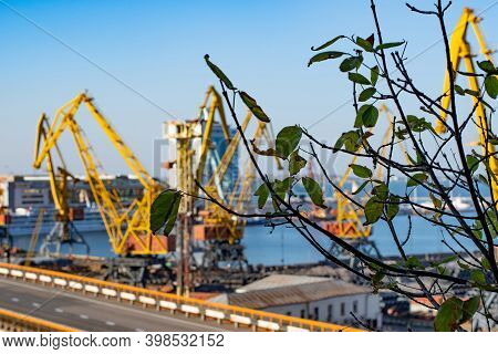 Fading Dry Green Brown Foliage Of Tree Branches In Front Of Blurred Background Of Seaport Industrial