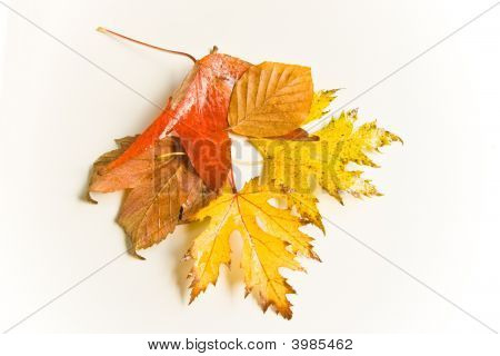 Wet and rainy autumn leaves in natural light poster