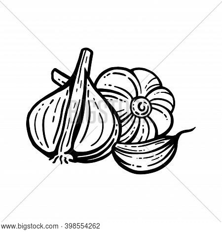 Garlic Set. Hand Drawn Illustrations. Sliced Garlic Isolated Background. With Layers.
