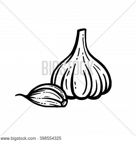 Garlic Vector. Hand-drawn. Head Of Garlic Isolated Background.