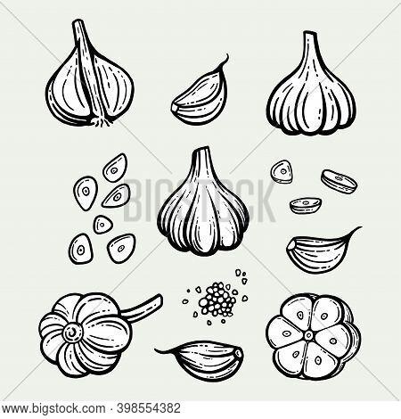 Garlic Set. Hand Drawn Illustration Of Chopped Garlic. Isolated Background