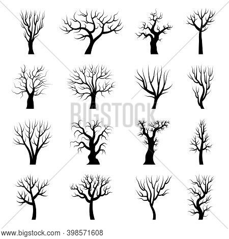 Tree Silhouettes. Winter Tree Branches Dead Autumn Plants Trunks Vector Illustrations. Wood Autumn T