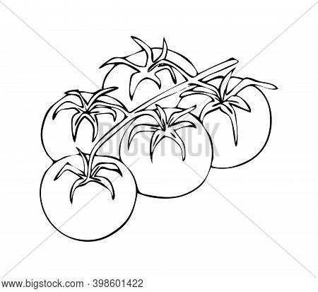 Tomato. Cherry Tomatoes On A Branch. Bunch Of Tomatoes. Graphic Drawing.