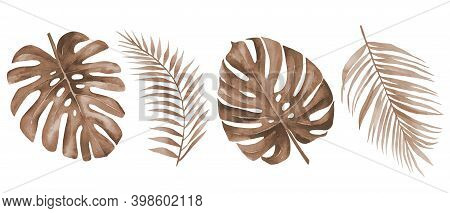 Dry Palm Leaves. Dried Tropical Monstera And Palm Leaf Set. Terracotta Plants. Watercolour Illustrat