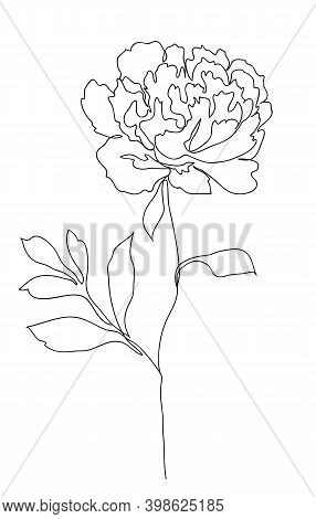 Beautiful Peony Flower. Line Art Concept Design. Continuous Line Drawing. Stylized Flower Symbol. Ve