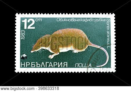Bulgaria - Circa 1983 : Cancelled Postage Stamp Printed By Bulgaria, That Shows Common Shrew (sorex