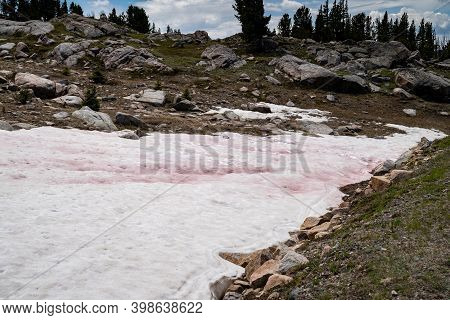 Pink Snow, A Phenomenon Known As Watermelon Snow, Found In The Summer Along The Beartooth Highway In