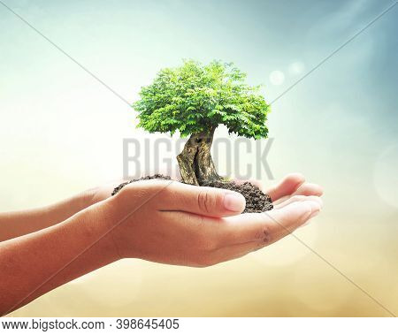 World Environment Day Concept: Human Hands Holding Big Tree Over Blurred Abstract Beautiful Green Na