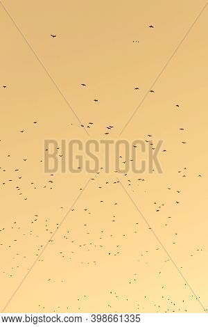 Migrating Birds On Stunning Warm Sunset Background With Vibrant Orange Red Yellow Colors And Scenery