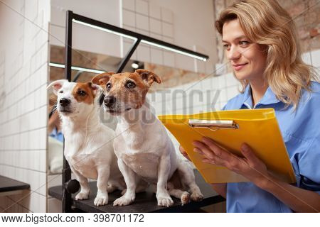Mature Female Veterinarian Writing Notes On Her Clipboard After Examining Two Adorable Jack Russel T