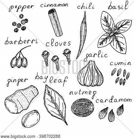 Spice Set Vector Illustration Black Pepper Cinnamon Chili Pepper Basil Barberry Clove, Garlic Cumin