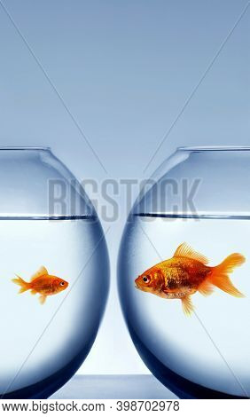 Big and small goldfish in tank