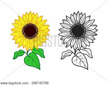 Sunflower Vector. Print For T-shirt, Color And Monochrome Icons Of Sunflower On White Background, Is