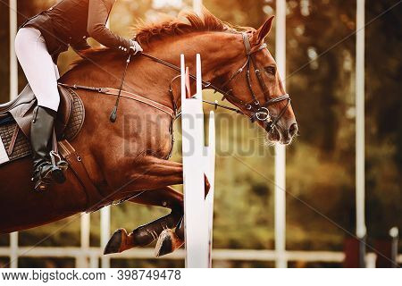 A Strong, Fast Bay Racehorse With A Rider In The Saddle Jumps A High Barrier, Illuminated By Sunligh