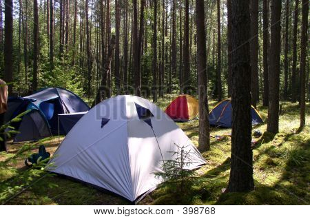 Tents In The Forest