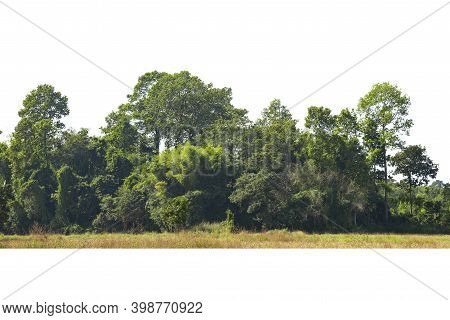 Green Trees Isolated On White Background, Forest And Foliage In Summer, Row Of Trees And Shrubs.
