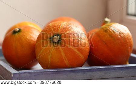 Small Pumpkin Still Life Halloween Closeup Photo