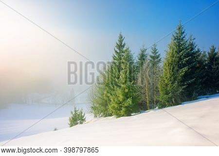 Trees In Morning Mist On A Snow Covered Hill. Beautiful Winter Landscape On A Sunny Weather