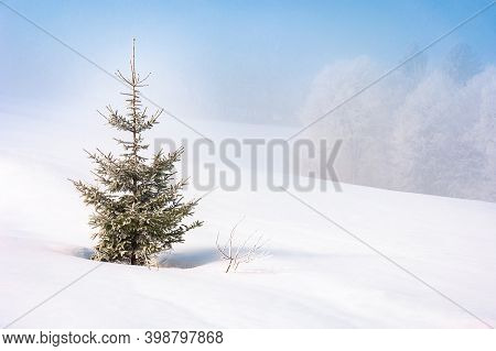 Spruce Tree In Mist On A Snow Covered Hill. Fairy Tale Winter Mountain Scenery. Frosty Weather On A