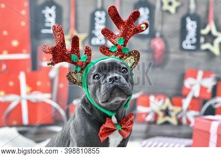 Young French Bulldog Dog Dressed Up With Reindeer Costume Antlers Headband And Bow Tie In Front Of F