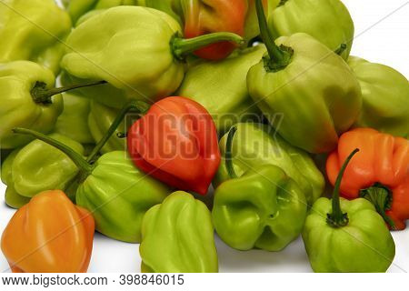 Hot Peppers Habanero Green, Yellow And Red On A White Background.