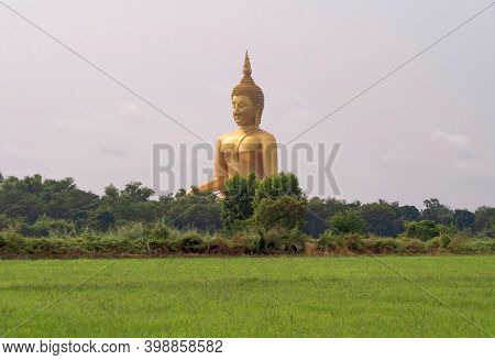 The Giant Golden Buddha In Wat Muang In Ang Thong District With Paddy Rice Field Near Bangkok. Urban