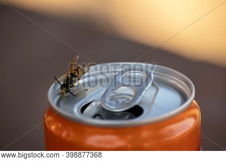Wasp Drinking Soda On The Can. Wasps