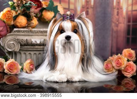 puppy dog Biewer Yorkshire Terrier and flowers